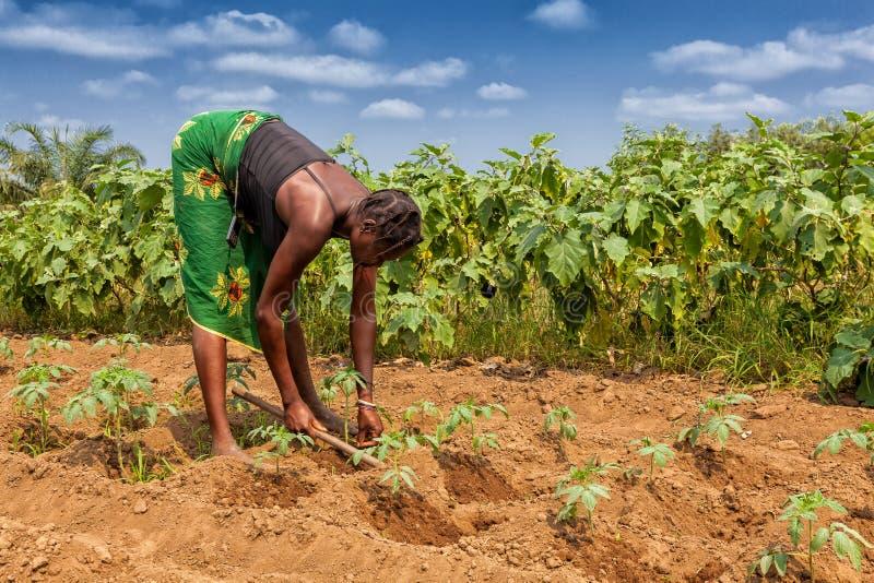 CABINDA/ANGOLA - 9 de junho de 2010 - fazendeiro rural até à terra em Cabinda Angola, África imagens de stock royalty free