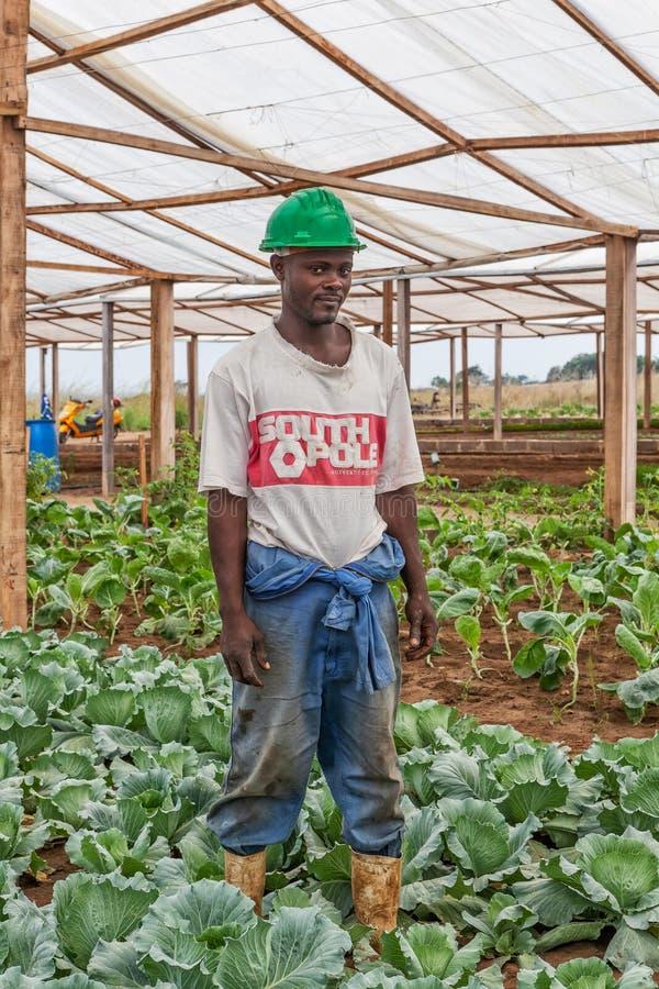 CABINDA/ANGOLA - 9 de junho de 2010 - retrato do fazendeiro africano dentro do fogão fotografia de stock