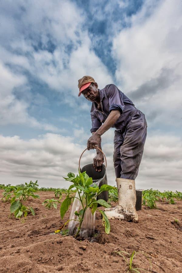 CABINDA/ANGOLA - 9 de junio de 2010 - col de riego africana del granjero que planta, Cabinda angola fotos de archivo libres de regalías