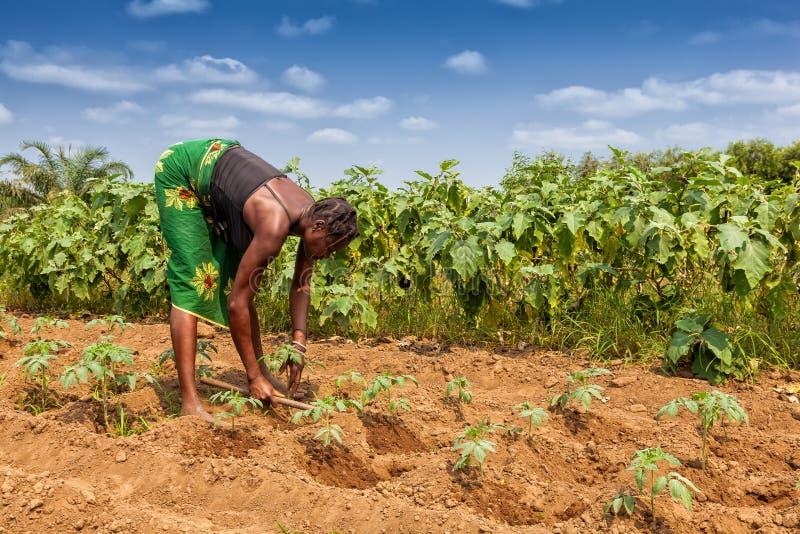CABINDA/ANGOLA - 9 de junio de 2010 - granjero rural hasta a la tierra en Cabinda Angola, África imagenes de archivo