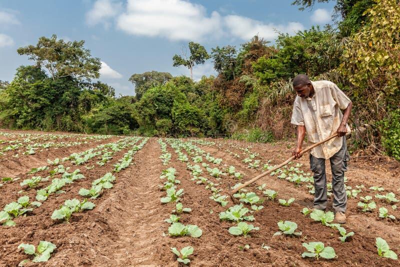 CABINDA/ANGOLA - 9 de junio de 2010 - granjeros rurales hasta a la tierra en Cabinda Angola, África fotografía de archivo