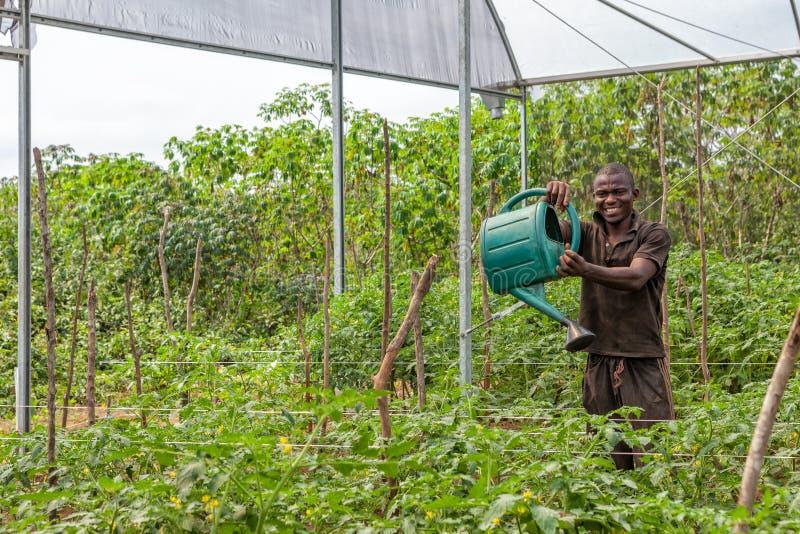 CABINDA/ANGOLA - 9 de junio de 2010 - retrato del granjero rural africano en la plantación imagen de archivo