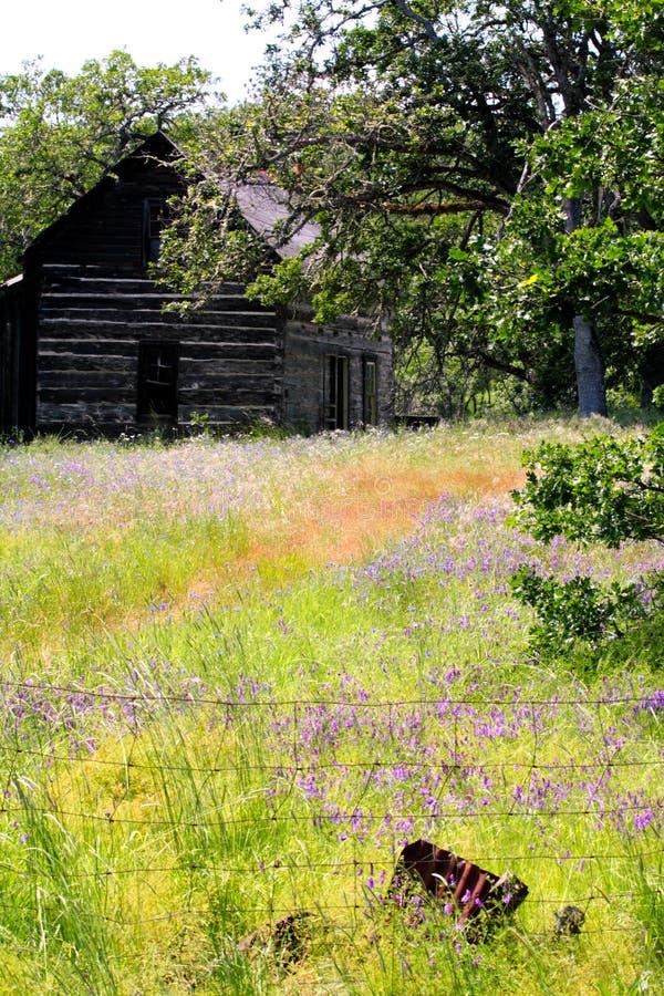 Cabine abandonada da herdade no campo de flores selvagens fotografia de stock royalty free
