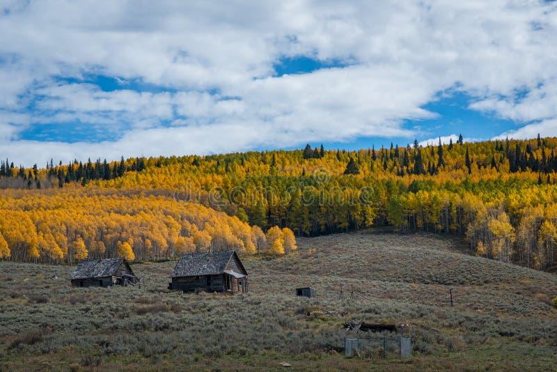 Cabine abandonada perto de Aspen Trees em Colorado imagem de stock