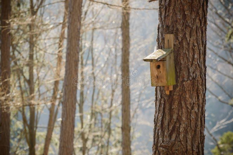 Cabine de madeira para pássaros na árvore imagens de stock