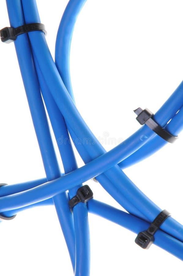 Cables De La Red De Ordenadores Foto de archivo