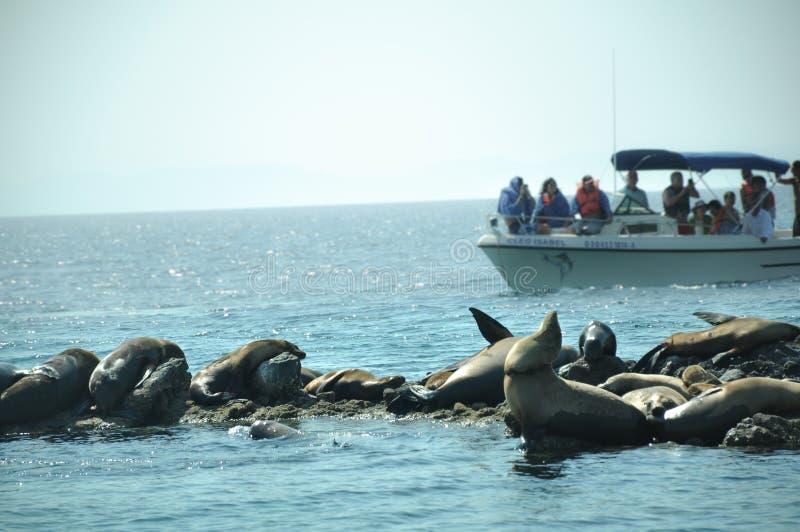 Cabo圣卢卡斯,下加利福尼亚州,墨西哥,06/07/2018:游人游览小船接近海岛海狮养殖 免版税图库摄影
