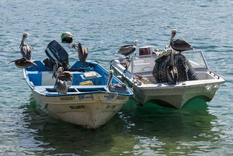 Cabo pelikany fotografia stock