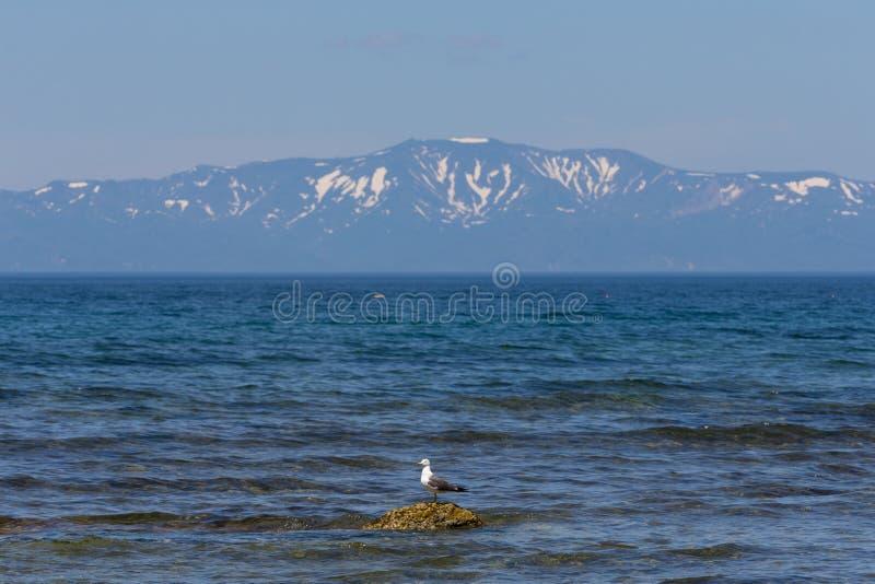 Cabo Stolbchaty Cabo na costa oeste da ilha de Kunashi imagens de stock royalty free
