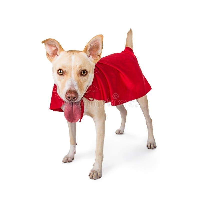 Cabo vestindo do super-herói do cão bonito fotografia de stock royalty free