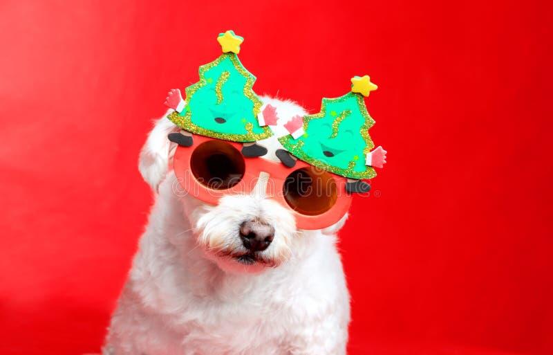 Cabot de Noël images libres de droits