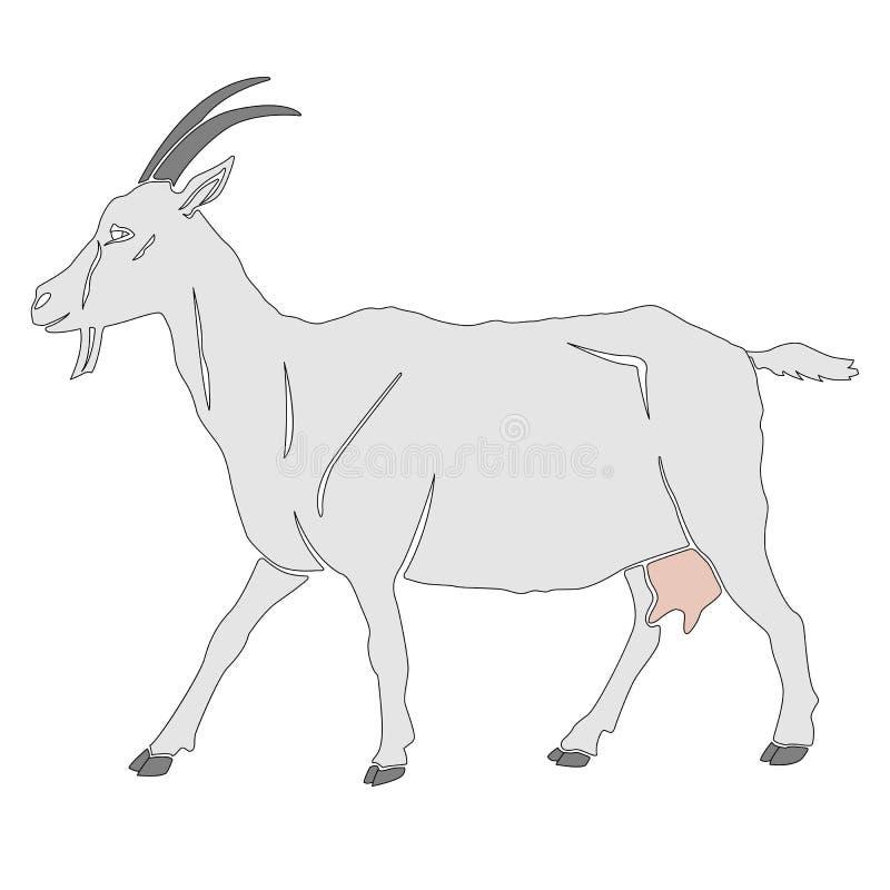 Cabra branca isolada ilustração stock