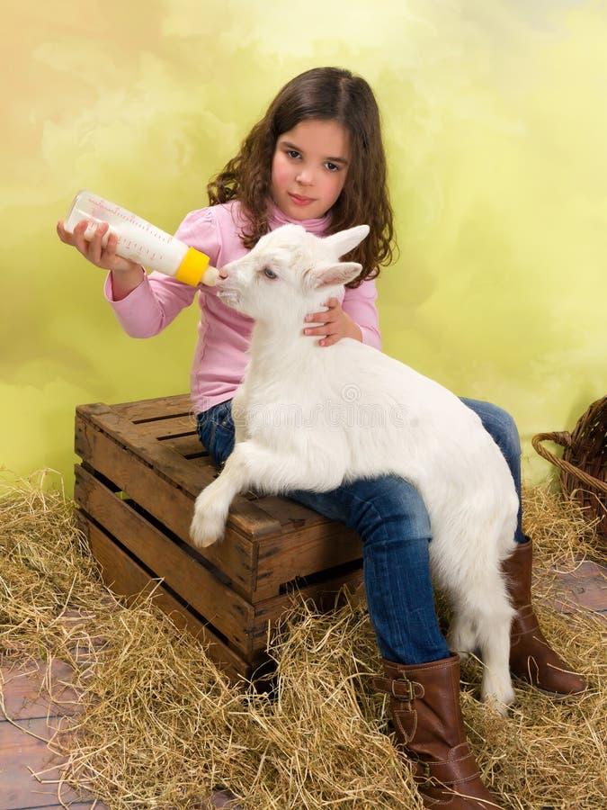 Cabra de alimentação do bebê da menina fotografia de stock
