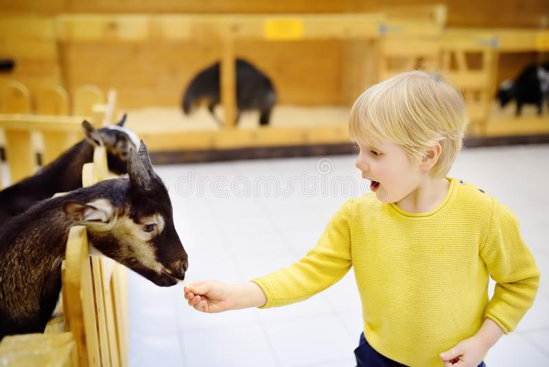 Cabra de alimentação do rapaz pequeno no jardim zoológico de trocas de carícias interno imagem de stock