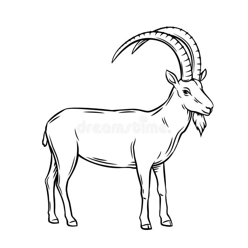Cabra de montaña stock de ilustración