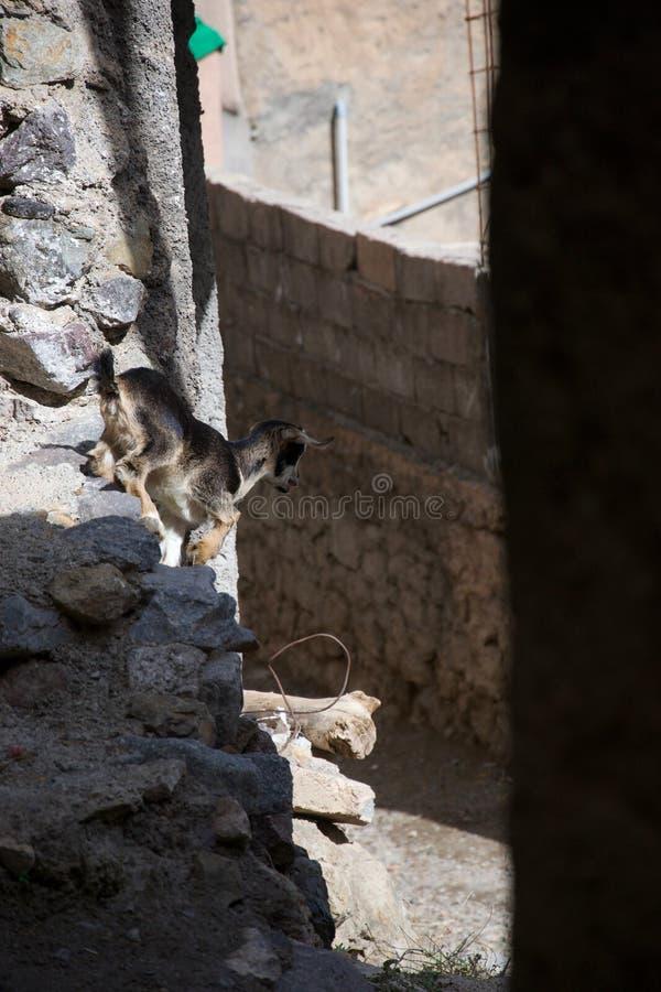 Cabra del bebé que salta abajo imagenes de archivo