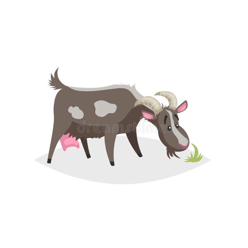 Cabra engraçada bonito Da exploração agrícola na moda lisa do projeto do estilo dos desenhos animados animal doméstico Suporte pr ilustração stock