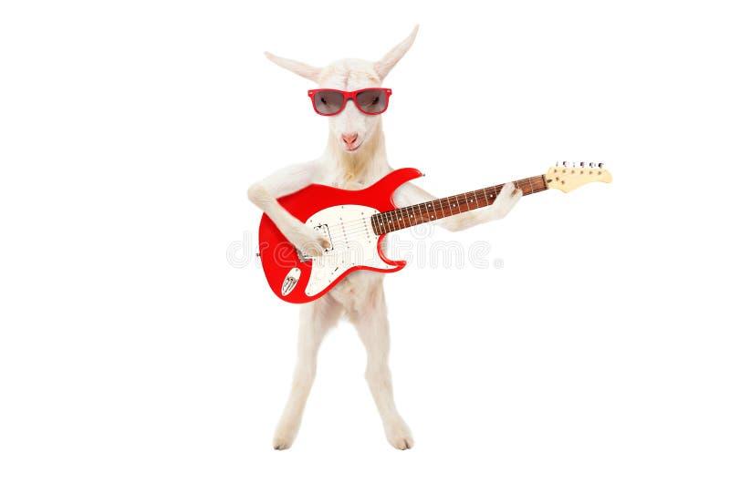 Cabra engraçada nos óculos de sol com guitarra elétrica imagens de stock royalty free