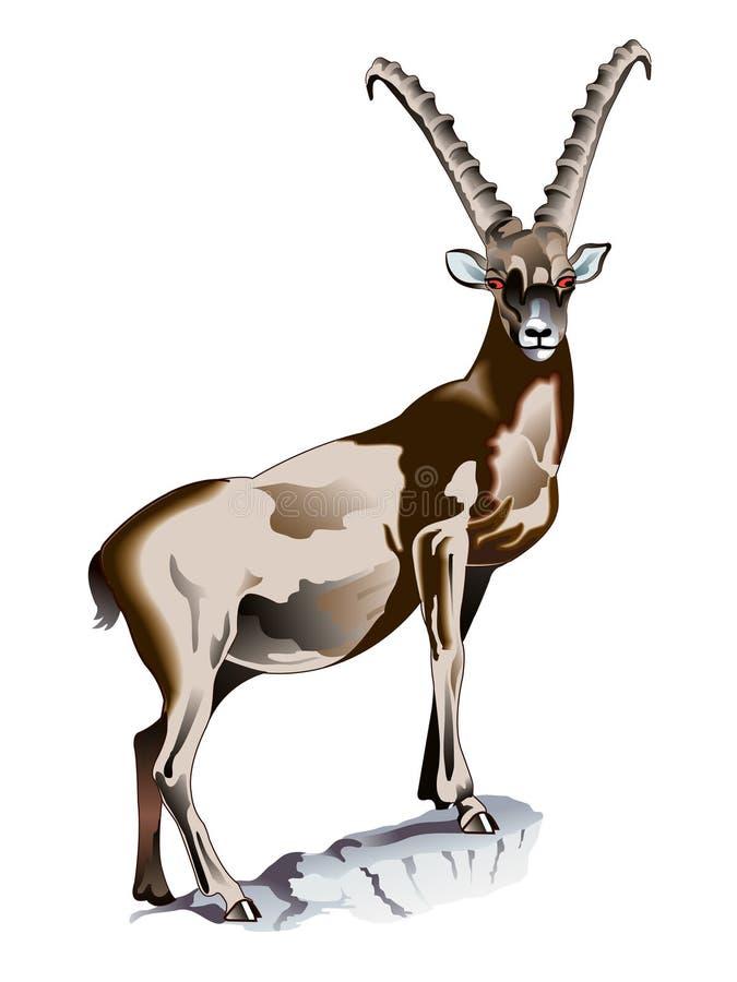 Cabra montés alpestre stock de ilustración