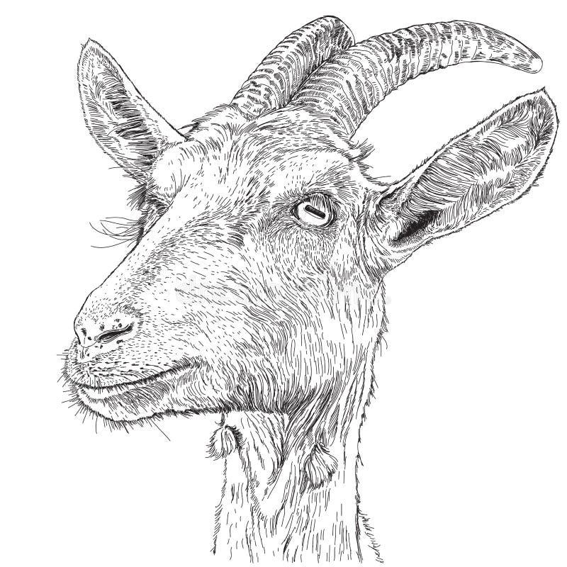 Cabra - um retrato ilustração do vetor