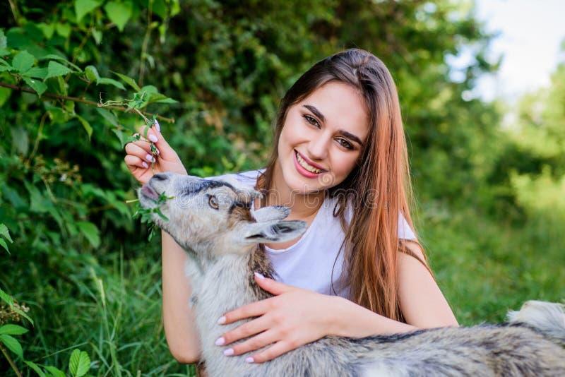 Cabra veterinária do cordeiro do cuidado cabra de alimentação do veterinário da mulher explora??o agr?cola e conceito do cultivo  fotografia de stock royalty free