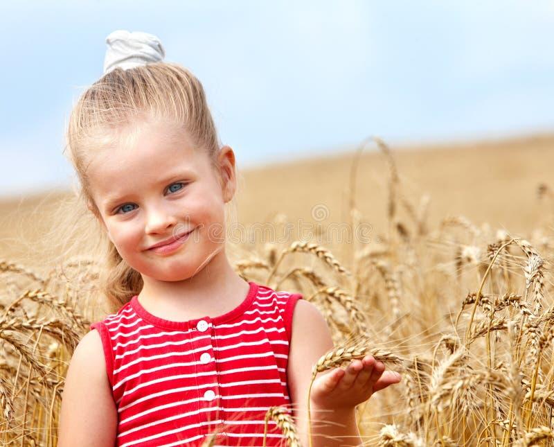 Cabrito en campo de trigo. foto de archivo