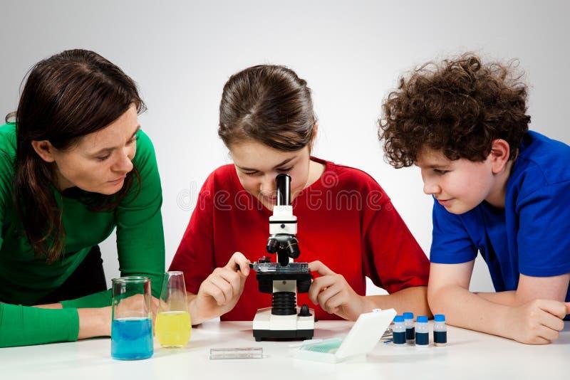 Cabritos usando el microscopio imágenes de archivo libres de regalías