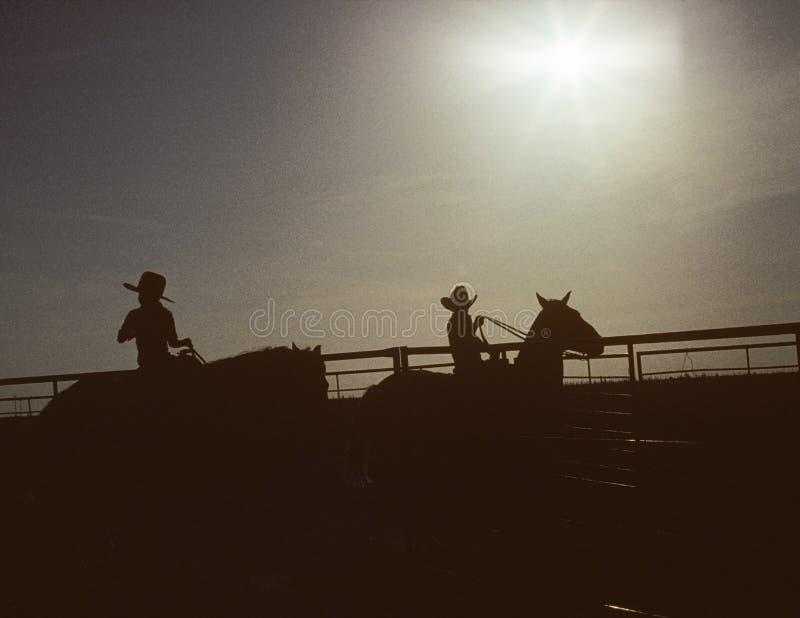 Cabritos y caballos de la silueta imagen de archivo