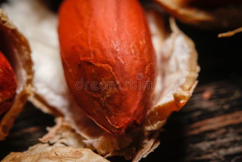 Cacahuete asado en cáscara y pelado imagen de archivo