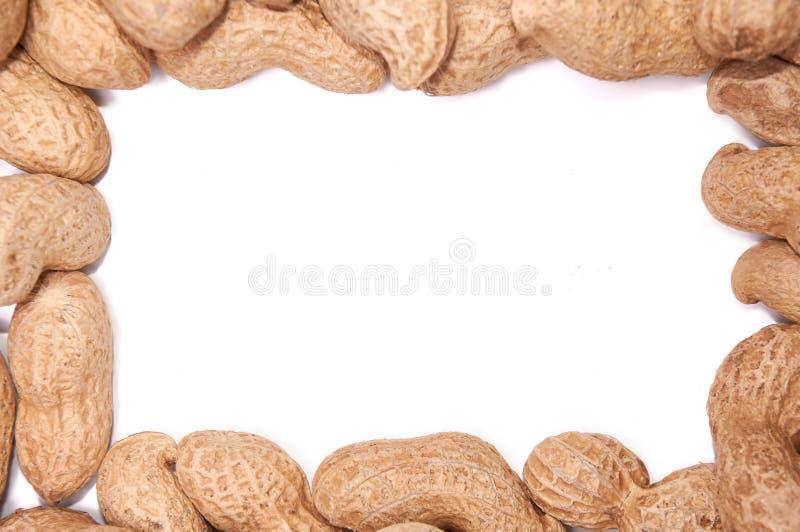 Cacahuetes en una cáscara en un aislante blanco del fondo foto de archivo