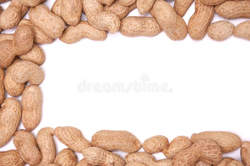 Cacahuetes en una cáscara en un aislante blanco del fondo imagen de archivo libre de regalías
