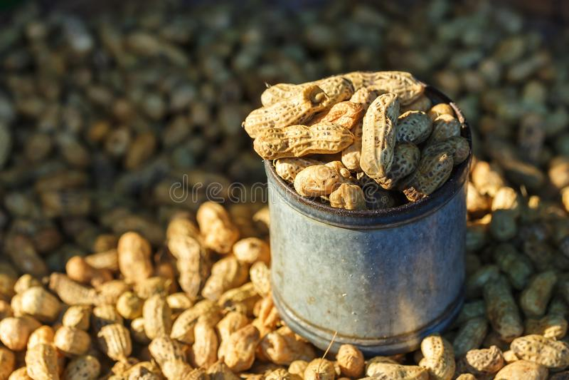 Cacahuetes hervidos para la venta en el mercado de Tailandia imágenes de archivo libres de regalías
