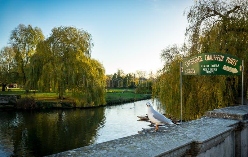 CaCAMBRIDGE, INGHILTERRA; 25 NOVEMBRE 2016 Camma e segno del fiume: Giro di calcio dell'autista di Cambridge fotografia stock
