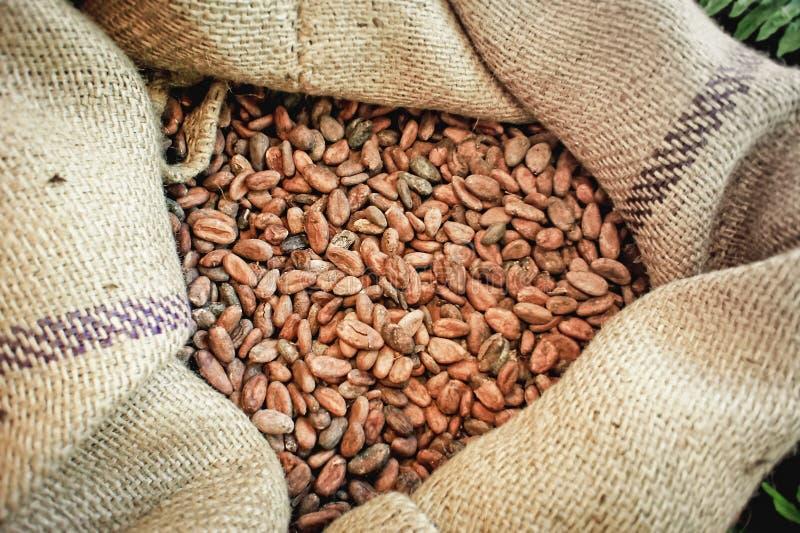cacao фасолей мешка стоковые фотографии rf