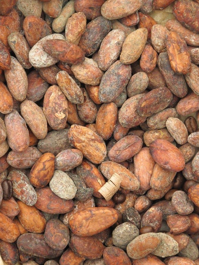 cacao фасолей стоковое фото