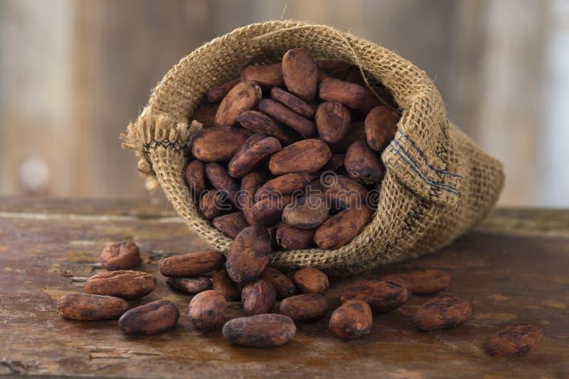 cacao fotografia de stock