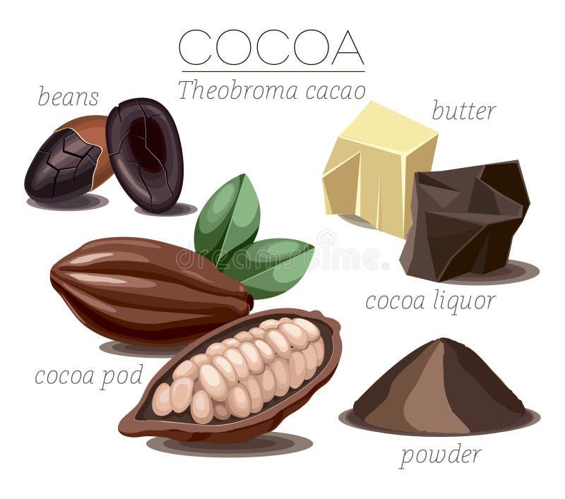 cacao vector illustratie