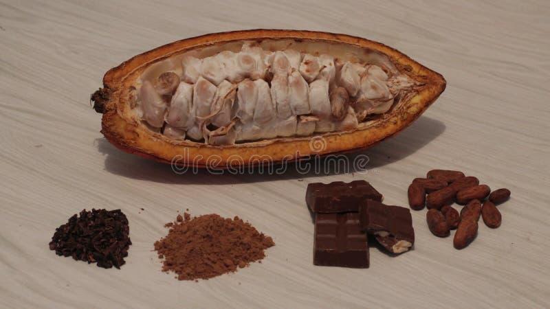 cacao fotos de stock royalty free