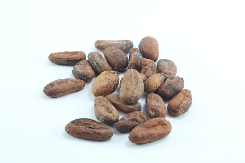 cacao imagens de stock royalty free