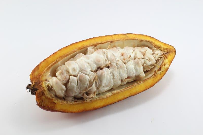 cacao foto de stock