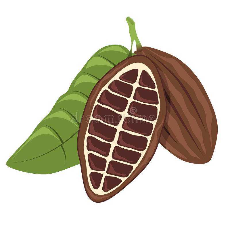 Download Cacao bean stock vector. Image of growth, aromatic, diet - 20259194