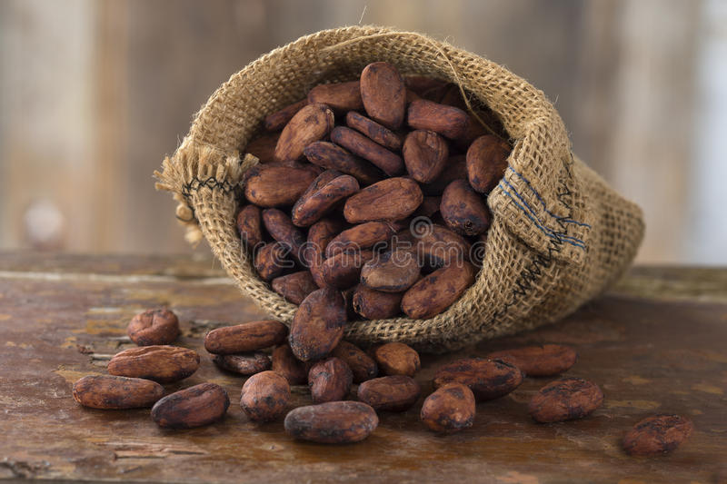 Cacao. Bean in hessian bag stock photography
