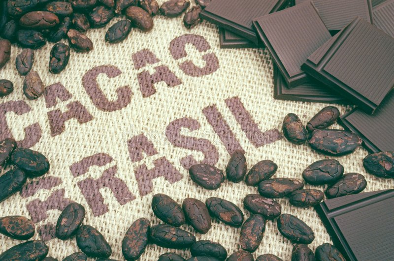 Cacao beans and hessian. An image of cacao beans and hessian stock image