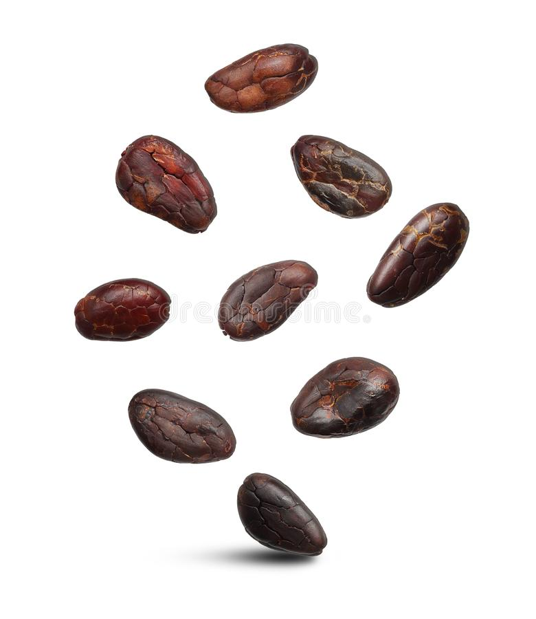 Cacao beans isolated stock image