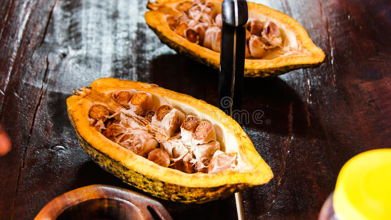 Cacao royalty free stock image