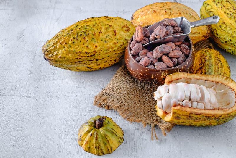 Cacao fresco con las vainas del cacao y los granos de cacao imagenes de archivo
