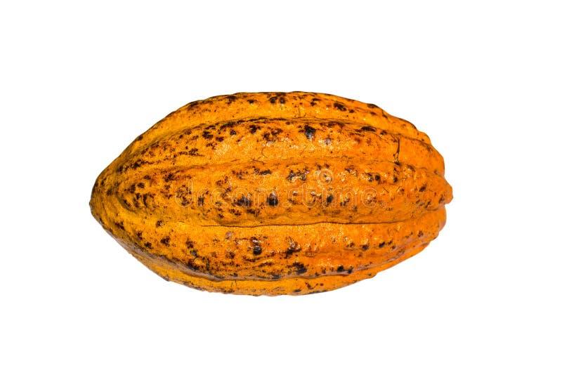 Cacao fresco del cacao fotografia stock