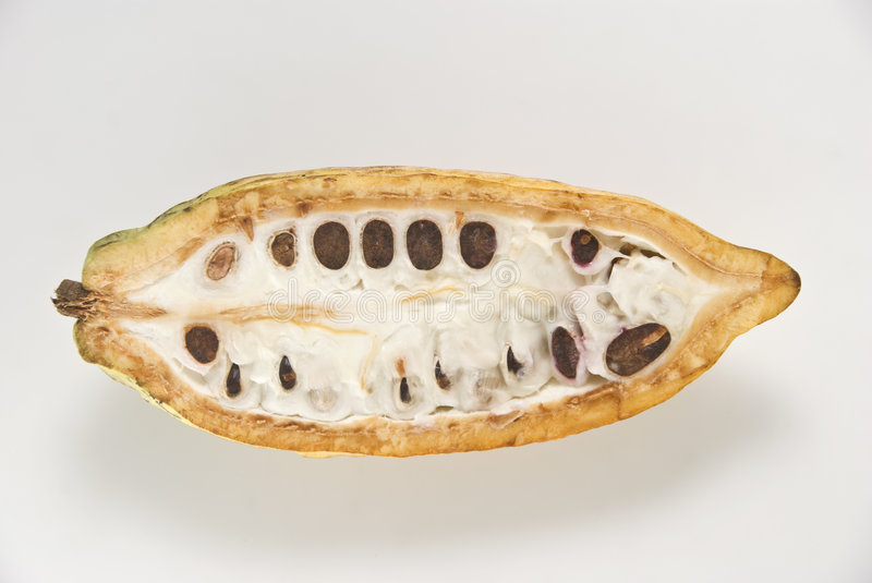 Download Cacao Fruit stock image. Image of tropical, exotic, healthy - 3825237