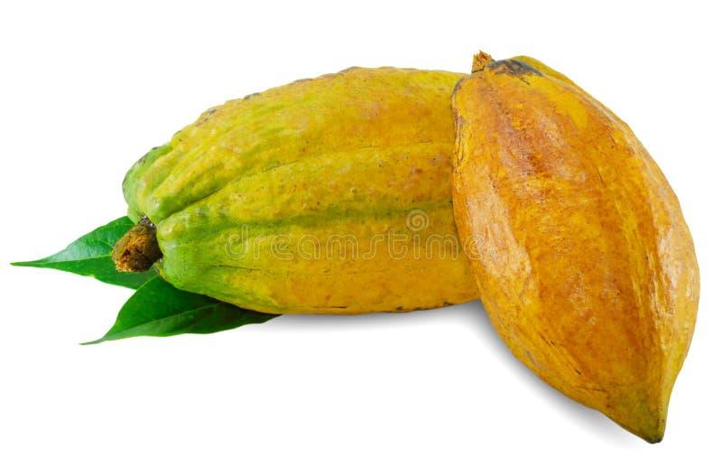 Cacao owoc odizolowywać na białym tle obraz royalty free