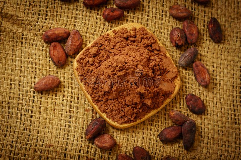 Cacao powder and cocoa beans on table. Cacao powder and cocoa beans on burlap background stock photography